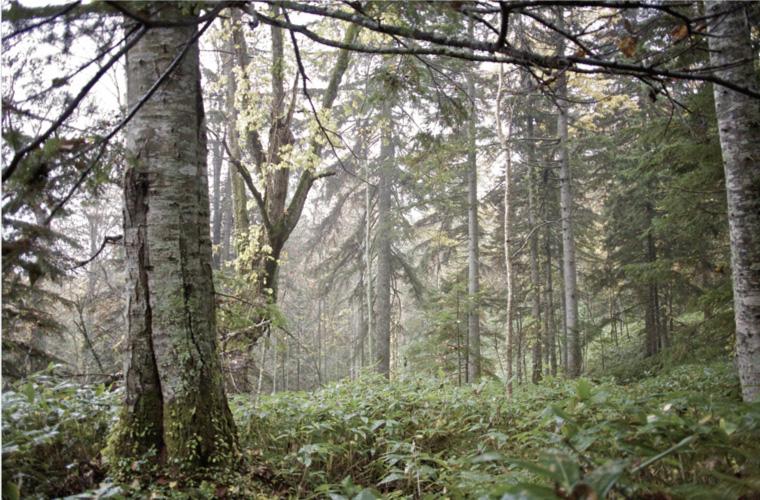 フプの森 フィールドボディーコート 画像7